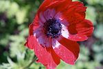 FLOWERS/CARLSBAD CALIFORNIA 2007
