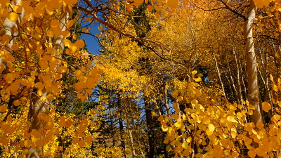 Fall Color 2016