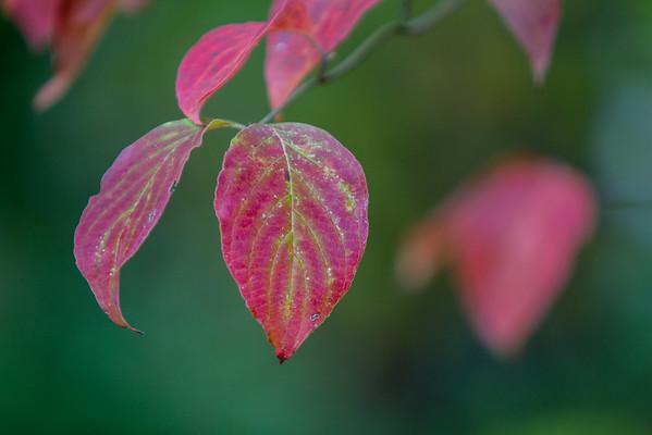 Fall Leaves 2016