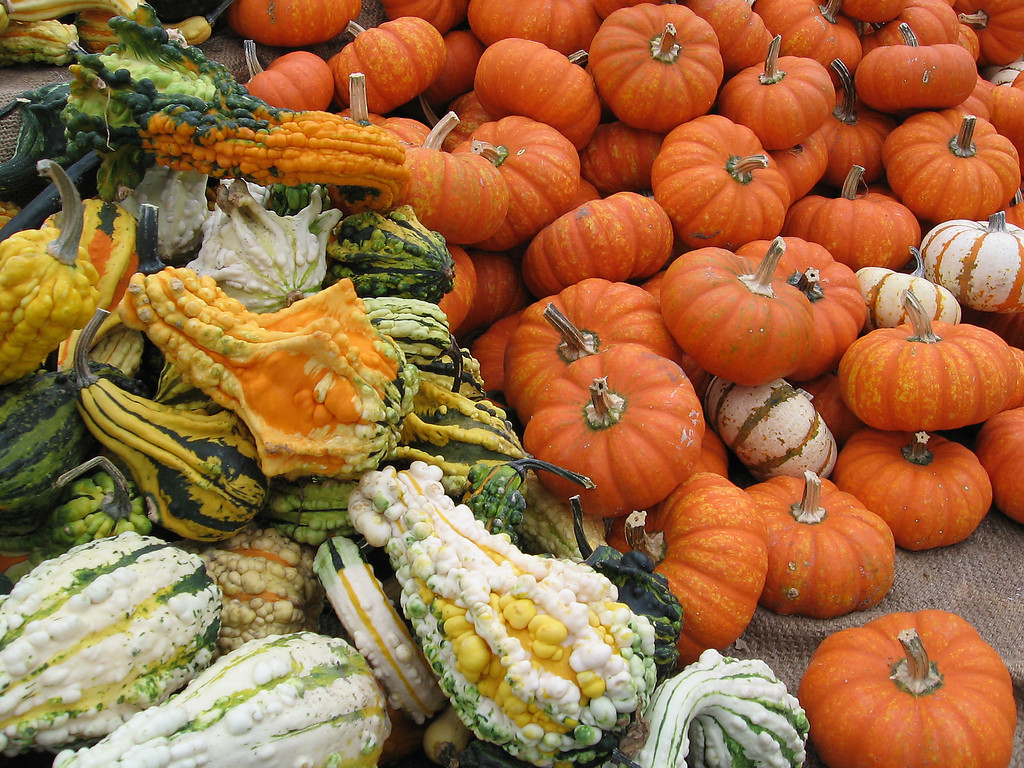 Colorful gourds and mini orange pumpkins