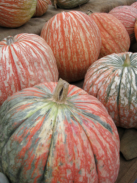 Large striped pumpkins
