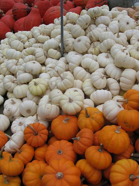 mini pumpkins - orange, white and red
