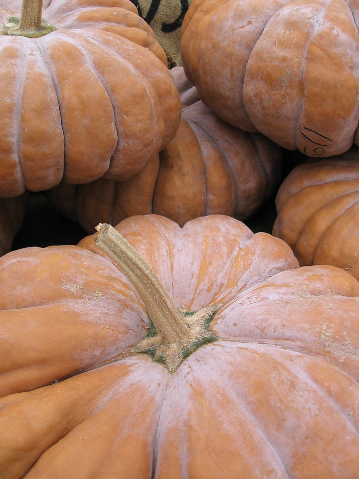 Flat pumpkins with deeply divided lobes