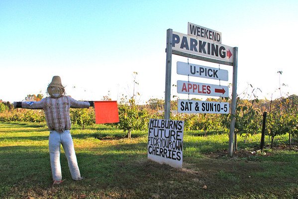 Fall at Milburn Apple Orchard