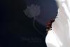 Edge of Infinity<br /> <br /> Ladybug on Comso<br /> <br /> 081313_000479 ICC sRGB 16x24 pic