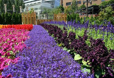 Festival of Flowers 2005