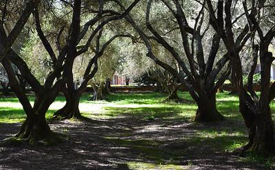 Filoli Gardens-3/12/14