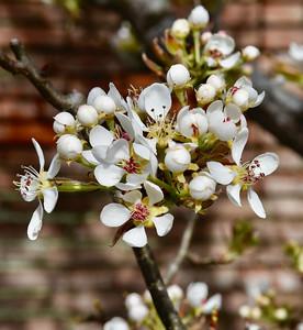 Filoli Gardens-3/30/18