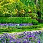 Filoli_Gardens_Purple_Flowers_DSC0712