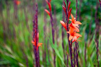 Filoli Gardens, CA
