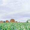 Lancaster County fields (fine art on FILM)