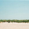 Beach breezes (fine art on FILM)