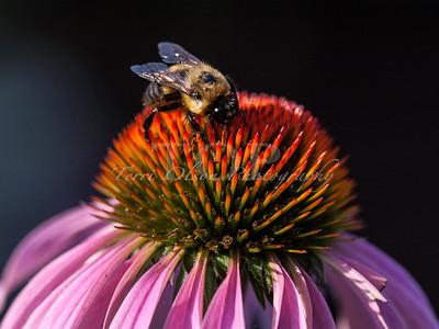 5 Hungry Bee2016