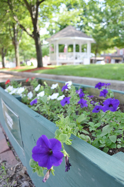 Flowers had apparently been ripped out of the flower boxes on Main St. early Tuesday morning. Local residents donated their time and worked to replace the flowers by Tuesday afternoon. The boxes are sponsored by local businesses or donated in memory of loved ones and are maintained by the Fitchburg East Rotary Club. SENTINEL & ENTERPRISE / Ashley Green