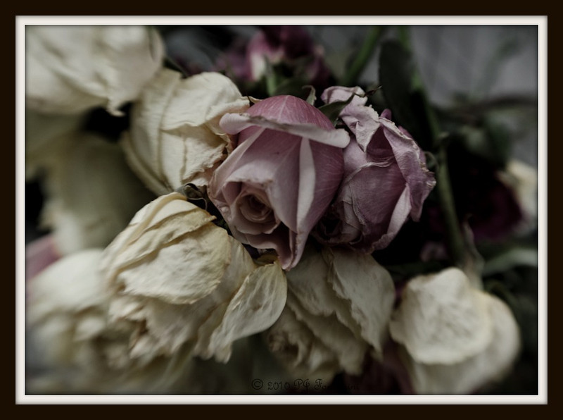 Faded Blooms