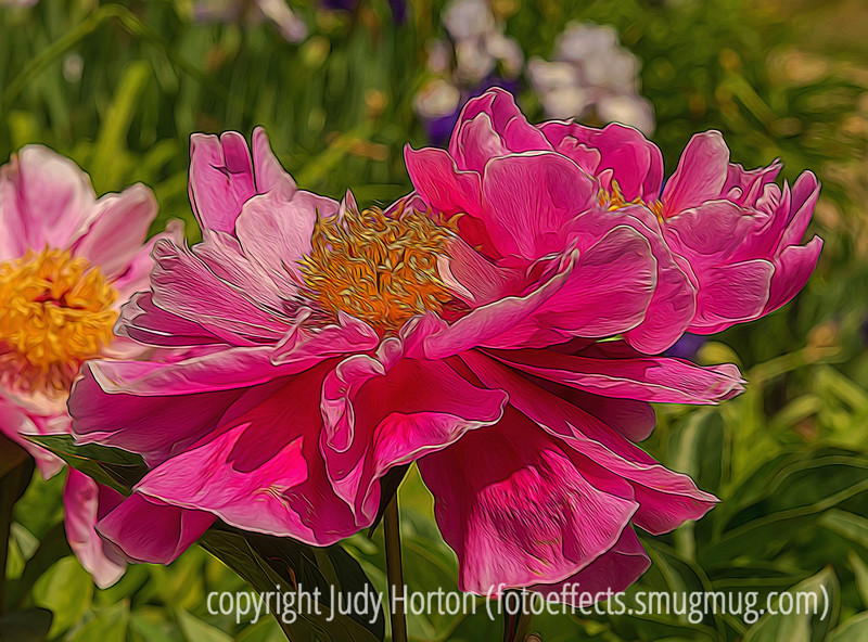 Peony with Various Effects