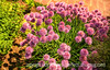 Chives with Painterly Effects