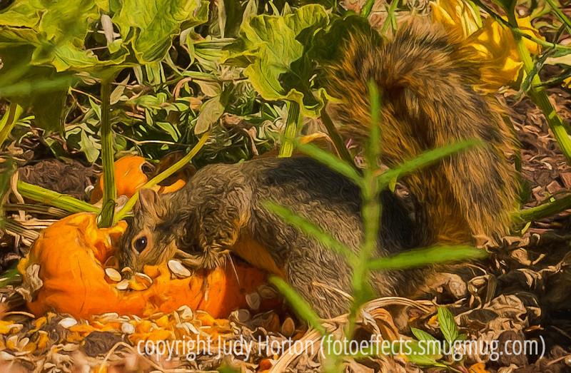 Squirrel Gorging on a Pumpkin