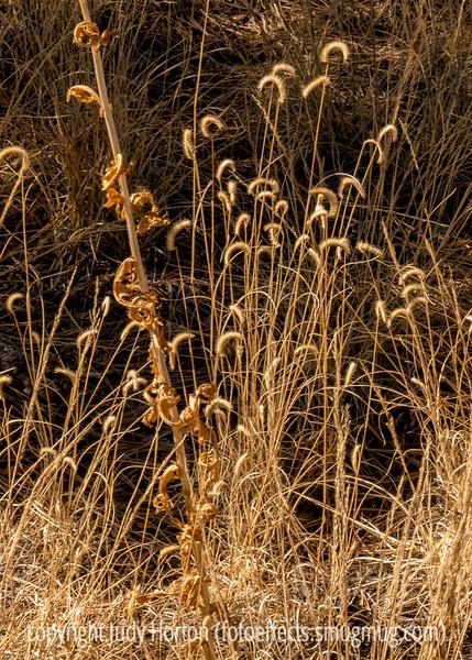 Grass Seedheads
