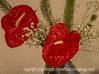 Anthuriums and Baby's Breath