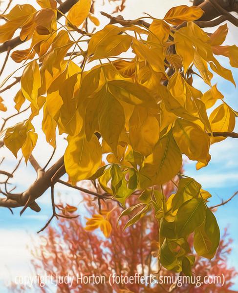Autumn Ash Tree Leaves