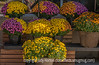 Chrysanthemum at the Grocery Store