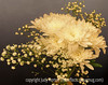 Chrysanthemums and Baby's Breath