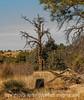 Dead Pine