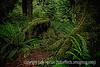 Koh Rainforest