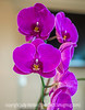 Orchid at the Dentists