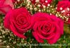 Supermarket Roses