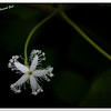 mybioscope > Flora of India photo