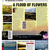 mybioscope > Pictures & article on Kaas Plateau (Maharashtra, India) published in the daily newspaper 'Asian Age'.