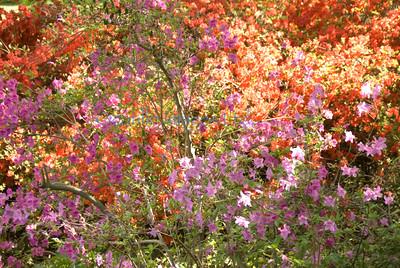 E flora paisley