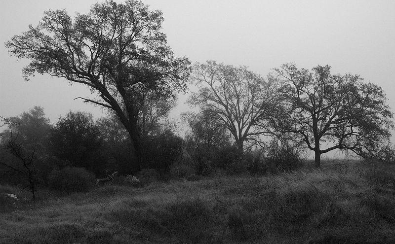 Trees in B/W