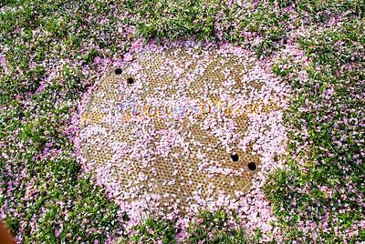 smug mug flora manhole