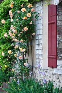F flora window roses