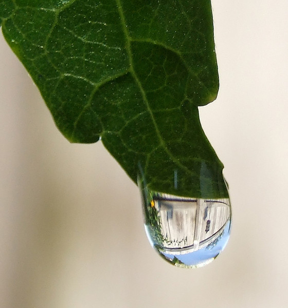 Life inside a waterdroplet.