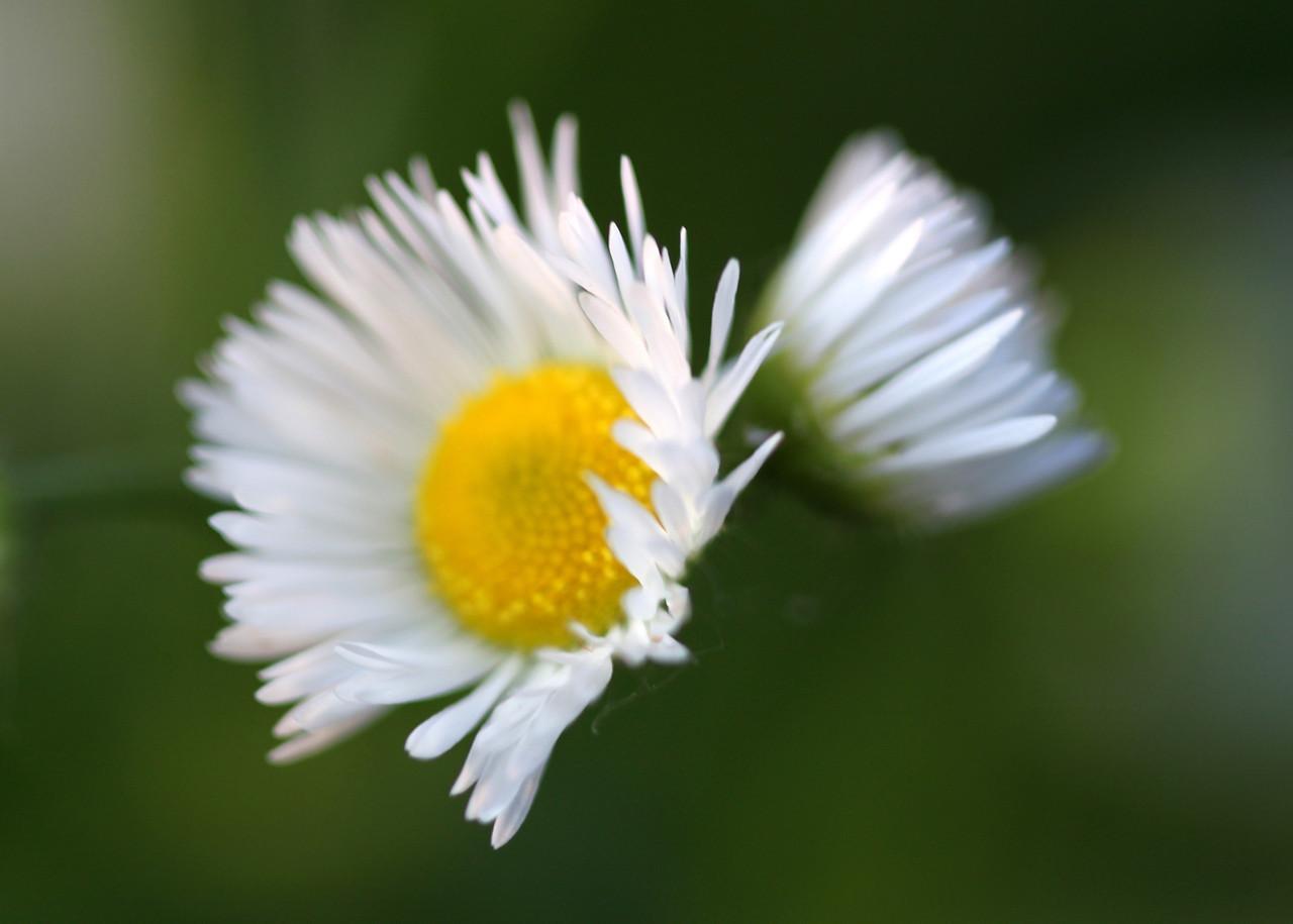 Tiny Petals
