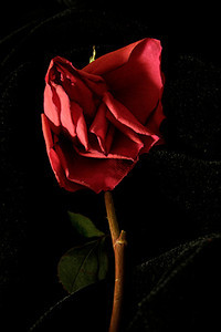 Ready to Love Again
