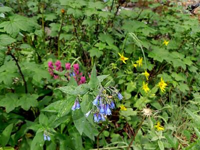 2012_07_06 Rocky Mtn Hike 9