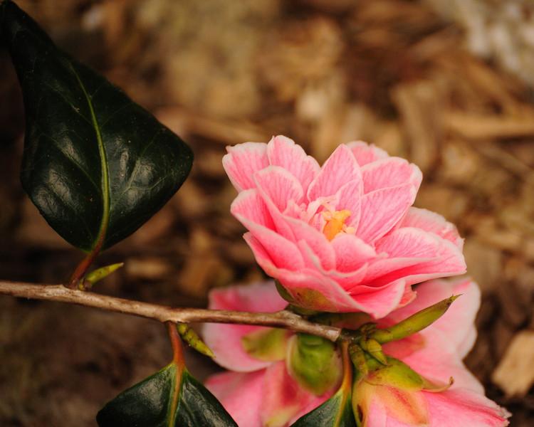 CornwallLens 400 2009 flower
