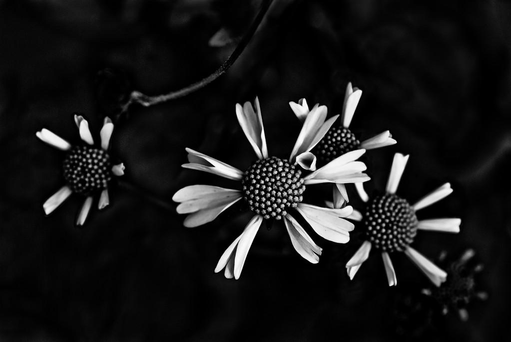 © 2010 Christina Lawrie