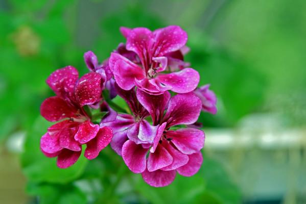 2008_08_08 Violet