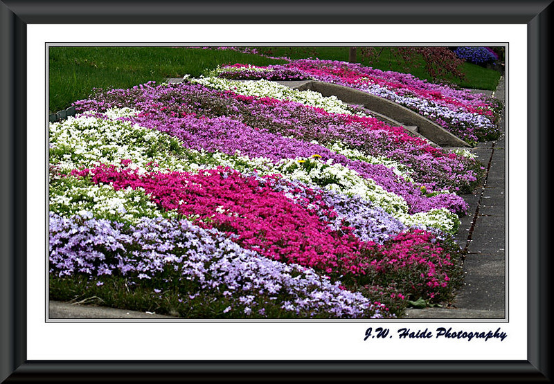 Sea of color in yard in Hillsboro, Oregon