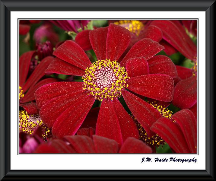 Flower in my yard in Hillsboro, Oregon