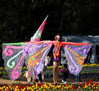 Butterfly Performers at Floriade 2012, Canberra
