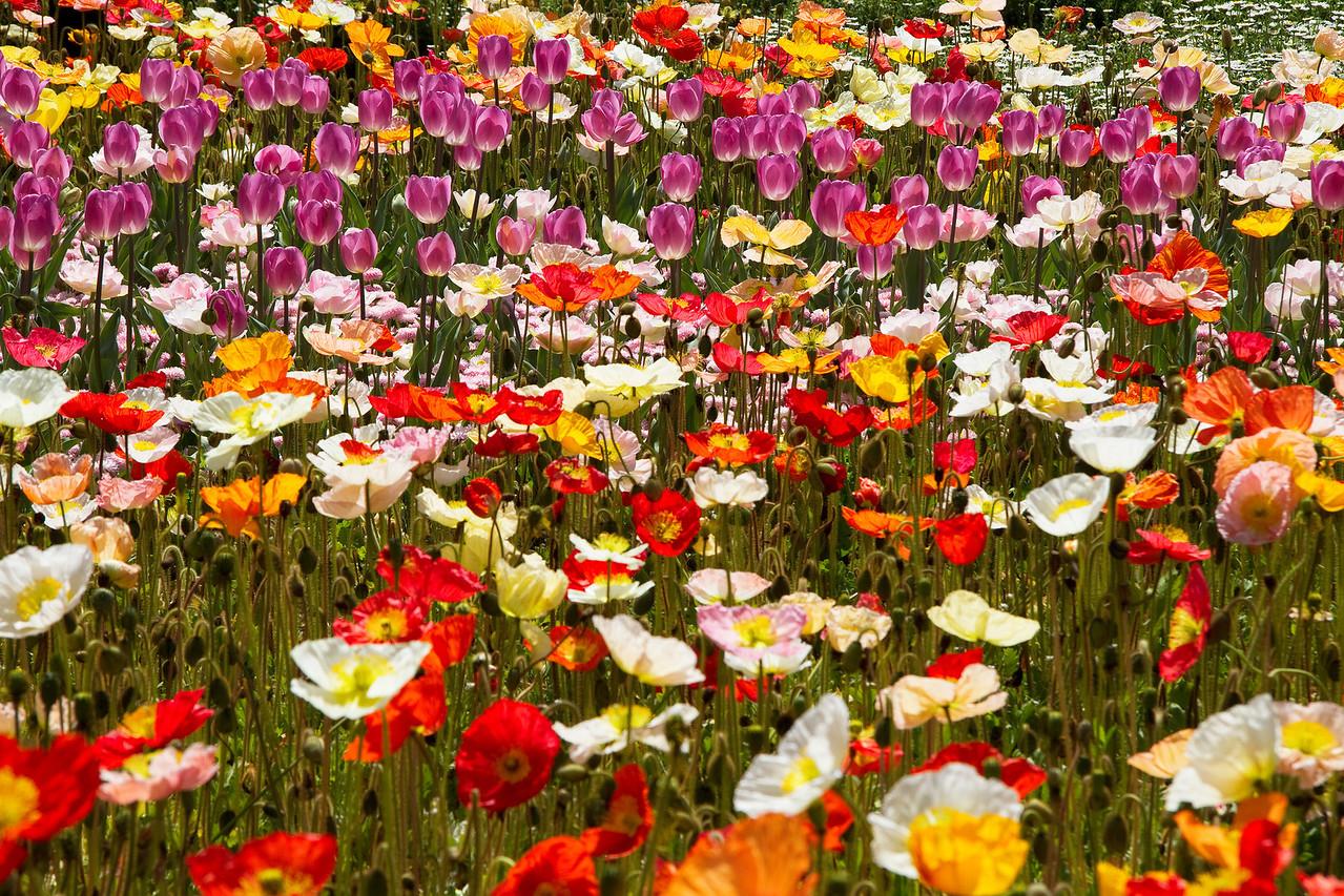 Flowers forever...