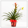 Get Well Potted Plant Wall Art 8055.02