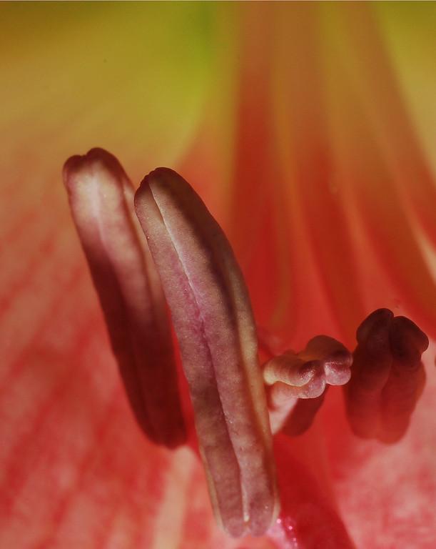 Flower Erotica